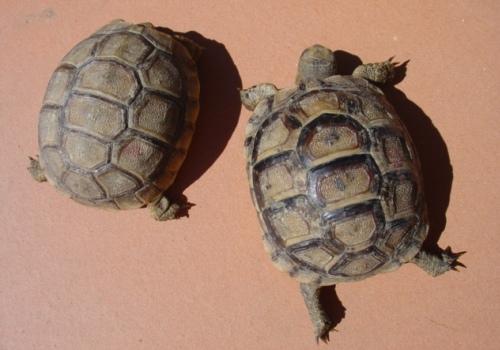 Tartoombria il sito di riferimento per tutti i for Laghetto tartarughe inverno
