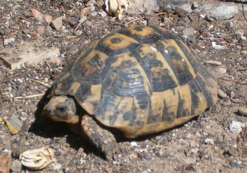 Tartoombria il sito di riferimento per tutti i for Temperatura tartarughe