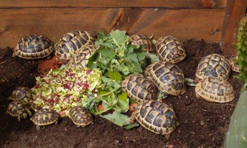 Tartoombria il sito di riferimento per tutti i for Terrario per tartarughe di terra giardino