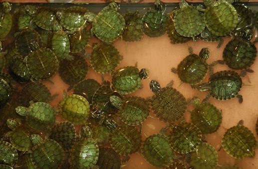 Tartoombria il sito di riferimento per tutti i for Vaschette tartarughe