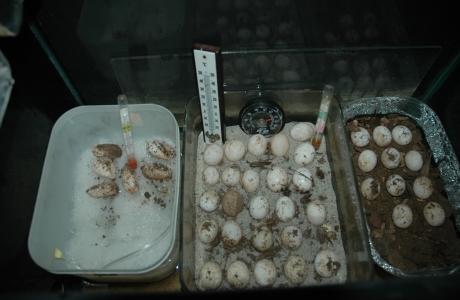 Tartoombria il sito di riferimento per tutti i for Contenitore per tartarughe