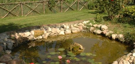 Tartoombria il sito di riferimento per tutti i for Vasche da giardino per tartarughe