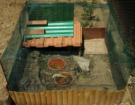 Tartoombria il sito di riferimento per tutti i for Terrario per tartarughe in giardino