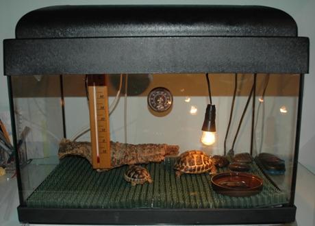 Tartoombria il sito di riferimento per tutti i for Riscaldatore per tartarughe