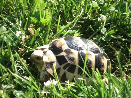 Tartitaly il blog fotografico di tartoombria blog for Terrario per tartarughe neonate