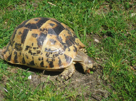 Tartitaly il blog fotografico di tartoombria for Terrario per tartarughe neonate