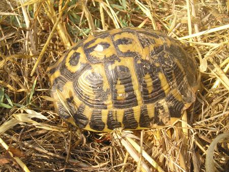 Toscana 2006 man 1