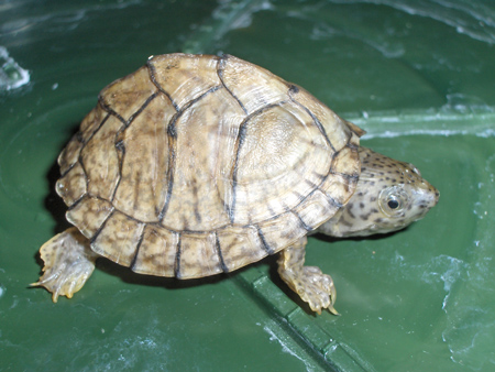 Tartitaly il blog fotografico di tartoombria blog for Laghetto tartarughe esterno