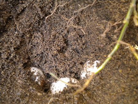 6_uova in terra
