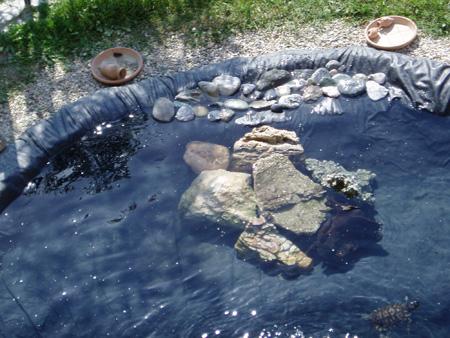 Tartitaly il blog fotografico di tartoombria blog for Costruire laghetto tartarughe