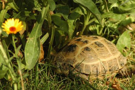 Tartitaly il blog fotografico di tartoombria blog for Letargo tartarughe acquatiche