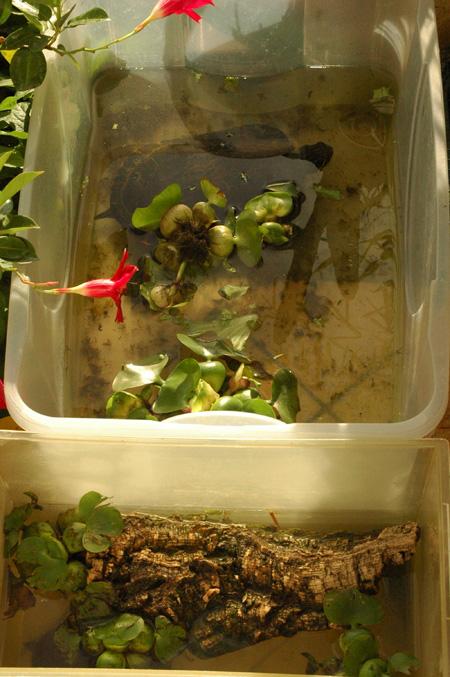 Tartitaly il blog fotografico di tartoombria blog for Letargo tartarughe acqua
